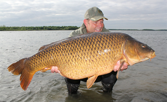 Angler holding a 46lb carp on the banks of a river in Canada/