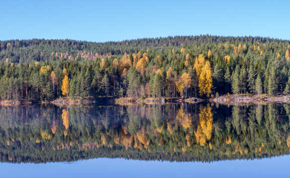 Swedish landscape, trees and water/
