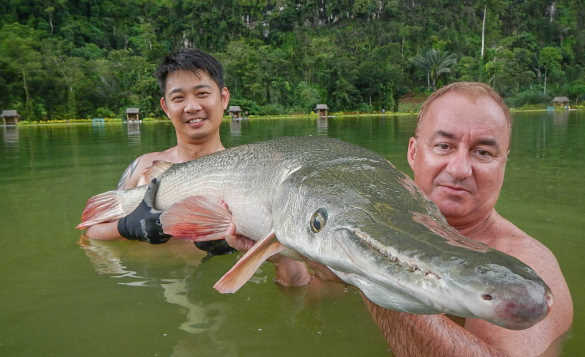 Two men chest high in a lake in Thailand holding a Alligator Gar fish/