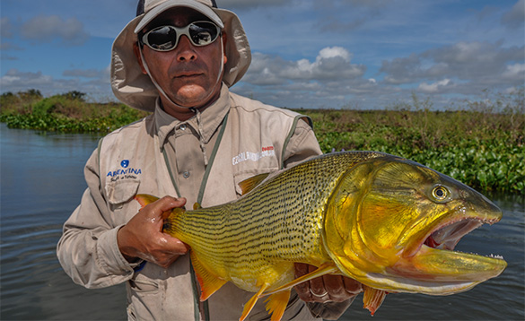 Angler holding a Golden Dorado fish that he has caught in Argentina/