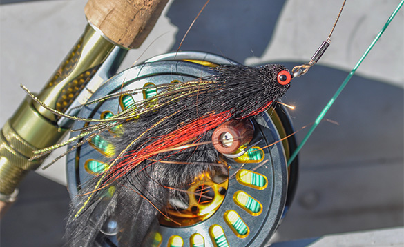 Close up a fishing reel with red and black feathered fly set up /