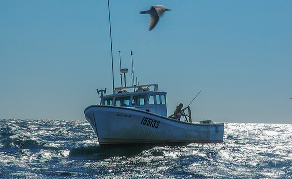 angler on a boat fishing at sea with a sea bird flying past/