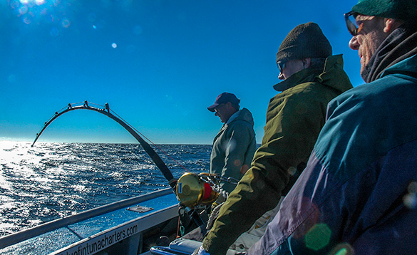 Prince Edward Island Bluefin Tuna Fishing
