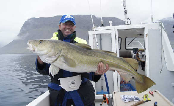 Angler stood on the deck of a boat holding a cod in Iceland/