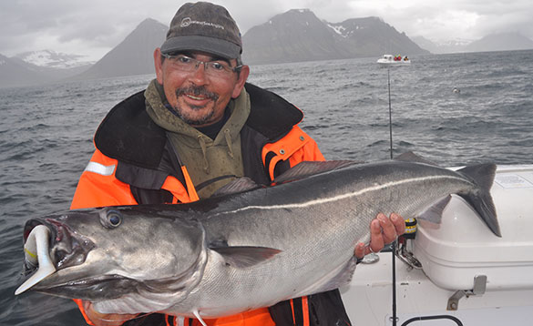 Man holding a thirty pound coalfish with snow capped mountains in the background/