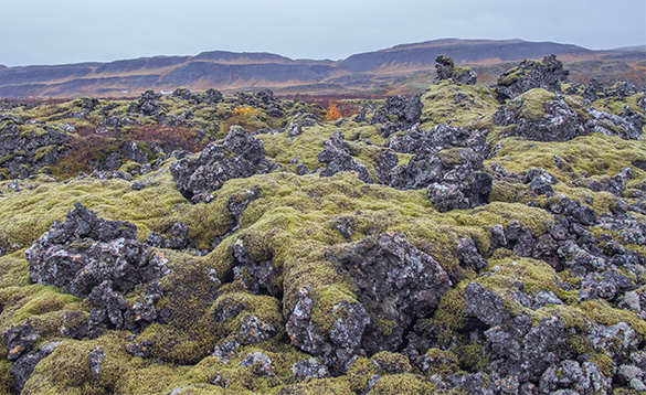 Lava field in Iceland/