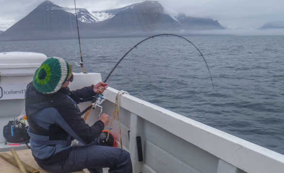Angler fishing from a boat in the waters around Iceland with snow capped mountains in the background/