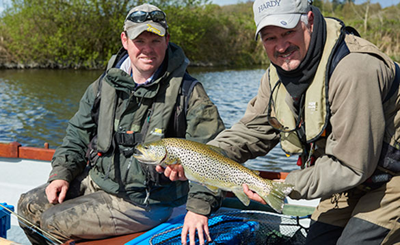 brown trout on lough sheelin/