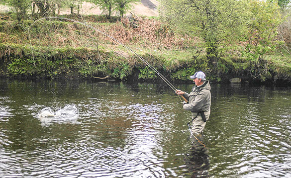 angler fights a big salmon river finn/