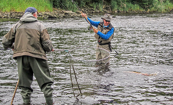 salmon action on river mourne in northern ireland/