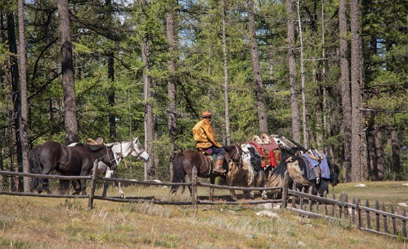 Man leading horses through trees in Mongolia/
