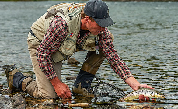 brown trout returned to Hemsedal River/