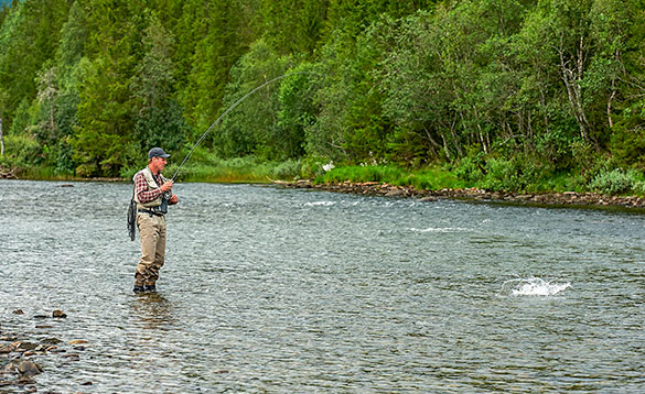 angler in action with brown trout. Hemsedal River/