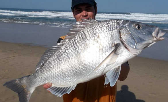 Angler holding a large silver grunter fish /