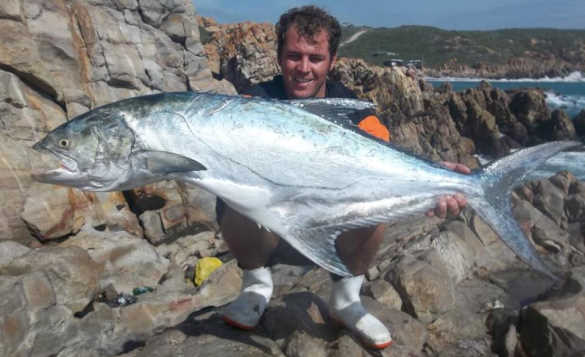 Angler on a rocky shoreline in South Africa holding a large garrick fish/