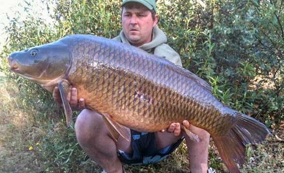 Big carp from a Spanish stillwater/