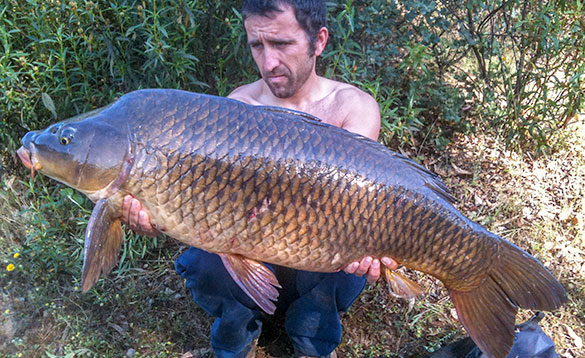 angler with big carp after feeding heavily/