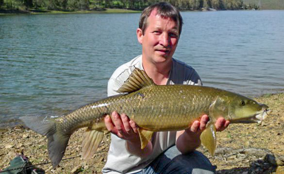 Barbel are found where lakes flow into rivers/