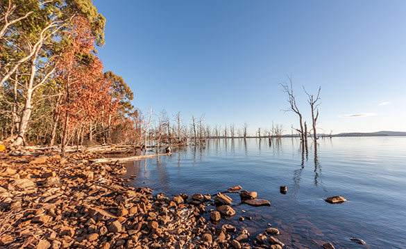 flooded gum trees on Tasmanian Lake/