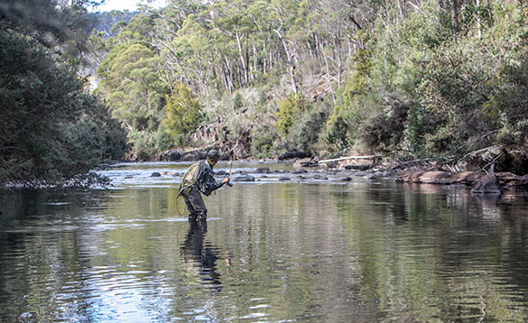 fly fishing a small river in Tasmania/
