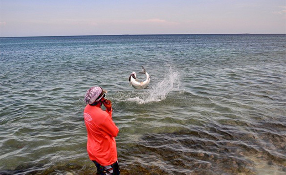 Man watching a tarpon fish leap out of the water in Belize/
