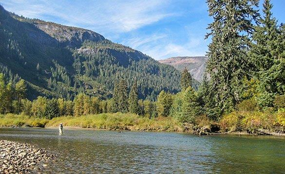 angler standing in a river fishing in front of forest and mountains/