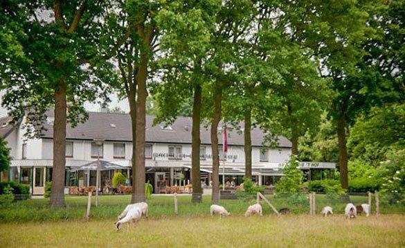 view across a field with sheep grazing and looking through trees to a two storey hotel painted white with grey roof/