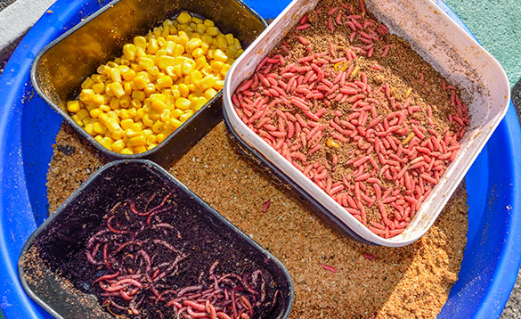 Sweetcorn, worms and maggots, fishing bait in containers/