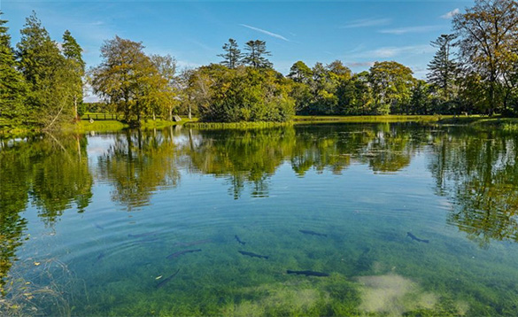 Fish just visible beneath the clear waters of a calm lake surrounded be trees/