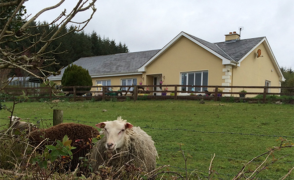 Sheep in a field in front of a cream bungalow/