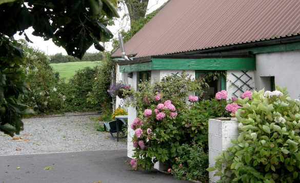 white single storey cottage with pink and white rhododendron bushes growing up the buildings/