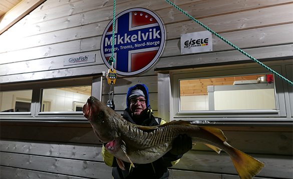 Angler with cod caught in Norway/