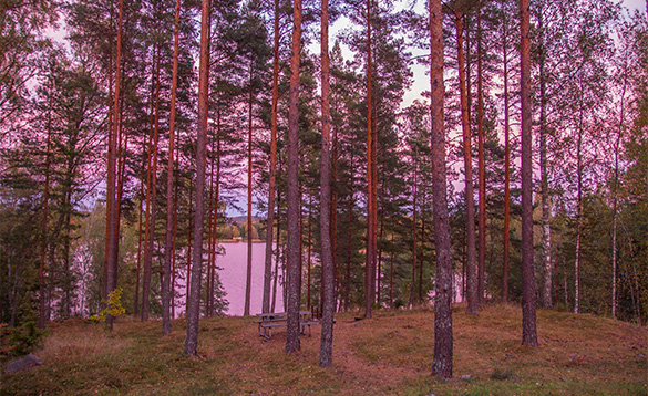 View between trees to a lake in Sweden/