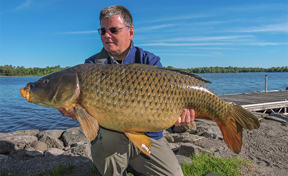 Angler holding a 39lb carp caught in Canada/
