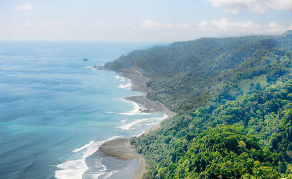 Tree covered hillside leading down to sandy beaches with waves breaking on the shoreline/