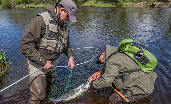 Anglers with a salmon in a landing net/