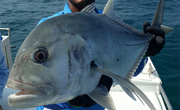 Angler holding a GT caught in the Andaman Islands/