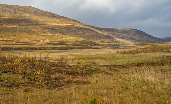 View across grassland in Iceland towards hills/