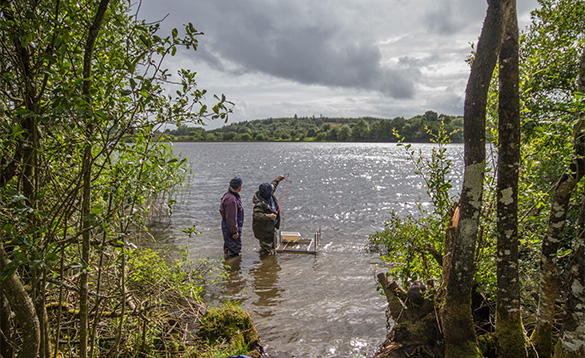 Two anglers standing in a lake in Co Cavan pre-baiting with a catapult/