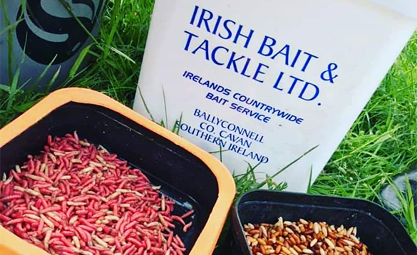 Fishing bait from Irish Bait and Tackle/