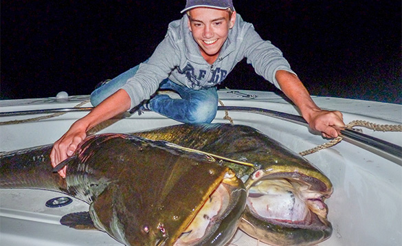 Angler on a boat with two large catfishon the deck/