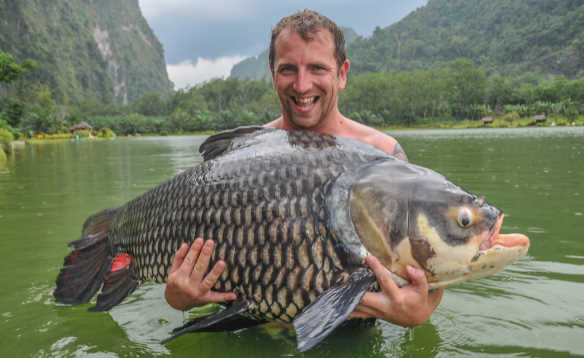 Anglers standing waist deep in a river in Thailand holding a large Siamese carp/
