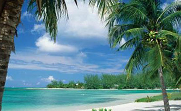 White beach and palm trees with clear blue sea /