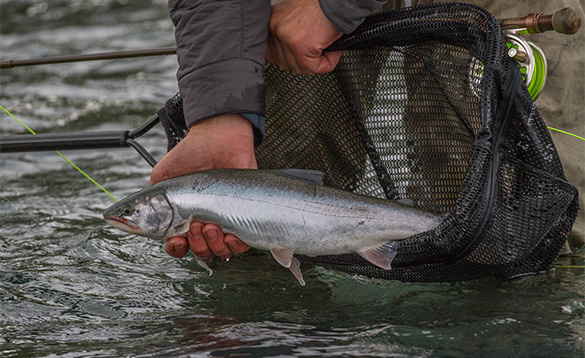 Angler holding a char recently caught in Alaska/