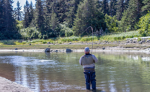 Angler stood in a river fishing in Alaska on a bright sunny day/