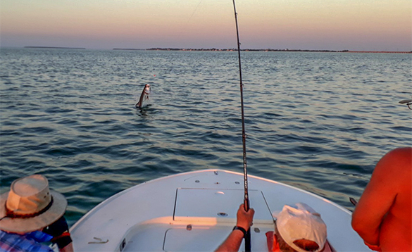 Anglers fishing for tarpon from a boat in Florida/